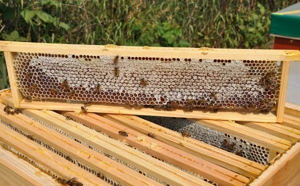 Miel angulaire en peigne