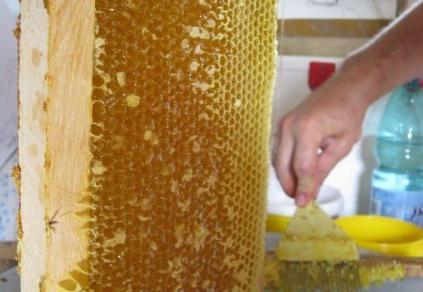 Peigne à miel coriandre