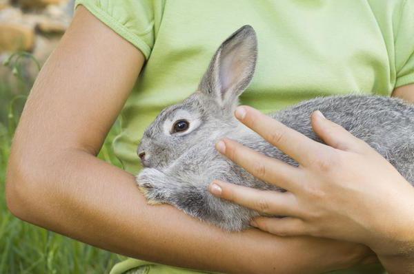 Abattage de lapins