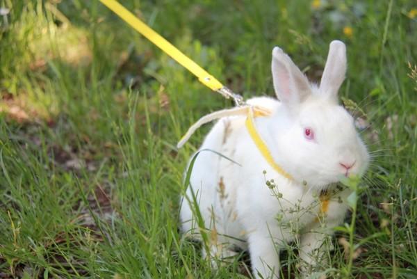 Comment soigner les lapins