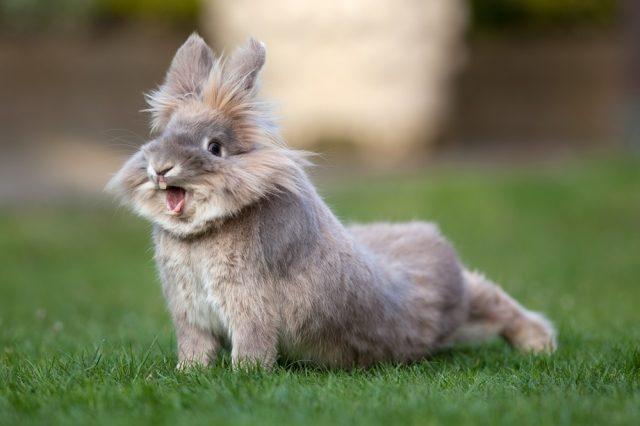 Rhinite chez le lapin: symptômes, traitement et prévention