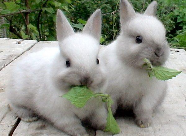 Que nourrir les lapins