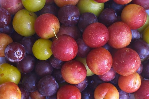 Choisissez les meilleures variétés de prunes à cultiver en fonction des caractéristiques