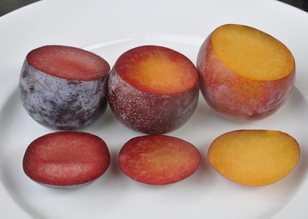 Les hybrides les plus insolites d'abricot, de pêche, de prune et de pomme, leur description, avantages et inconvénients