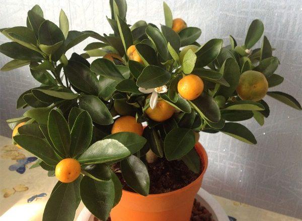 Chambre Mandarin