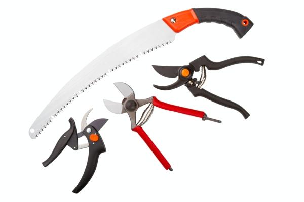 Le sécateur, la scie à métaux, le couteau de jardin et le lopper doivent être aiguisés et assainis.