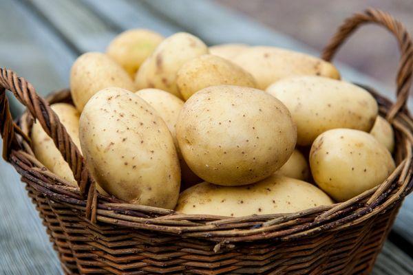 Les meilleures variétés de pommes de terre