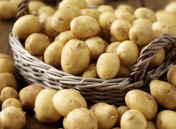 Variétés de pommes de terre précoces