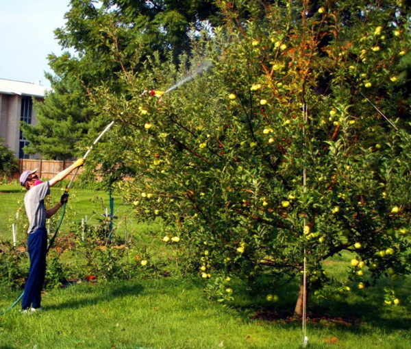 Conditions de traitement des arbres fruitiers