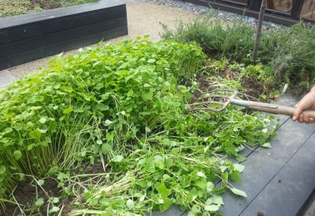 siderata dans le jardin