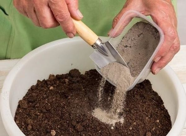 Les cendres peuvent être mélangées à la terre puis dispersées autour des arbres.