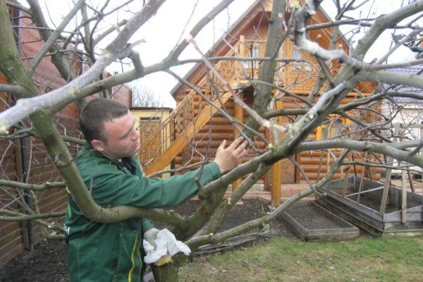 Les engrais phosphatés renforcent les arbres
