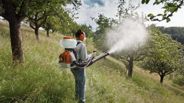 pulvérisation d'arbres d'automne