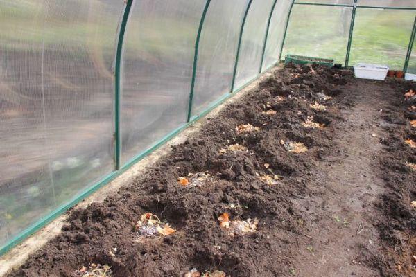 De la matière organique doit être ajoutée aux puits ou aux lits avant la plantation.