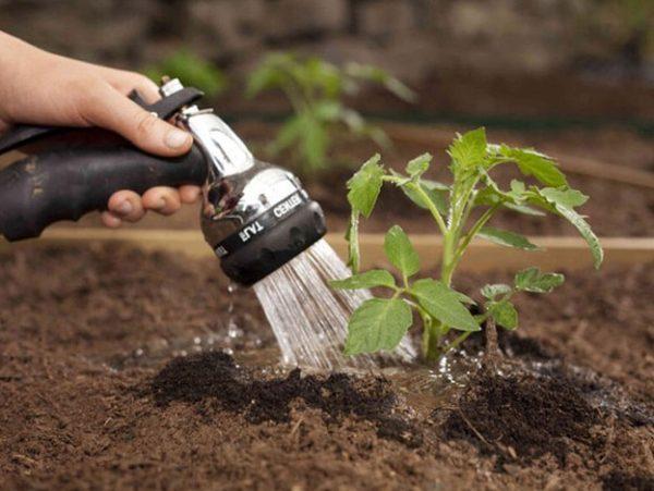 Toute l'irrigation de la tomate est effectuée selon différents schémas.