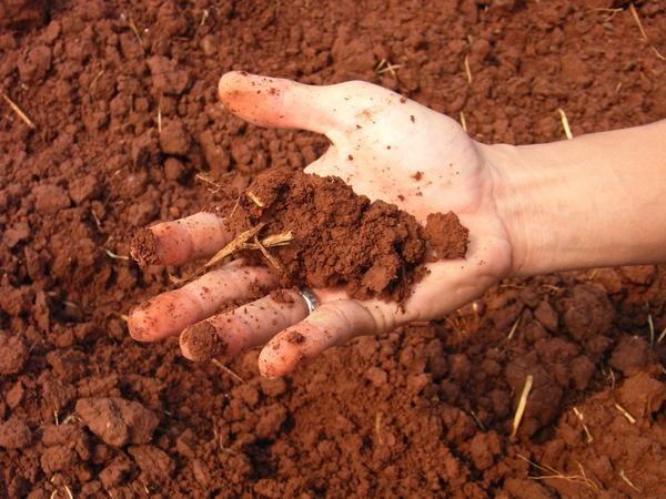 Si le sol alcalin est arrosé avec du vinaigre, la réaction devrait disparaître.