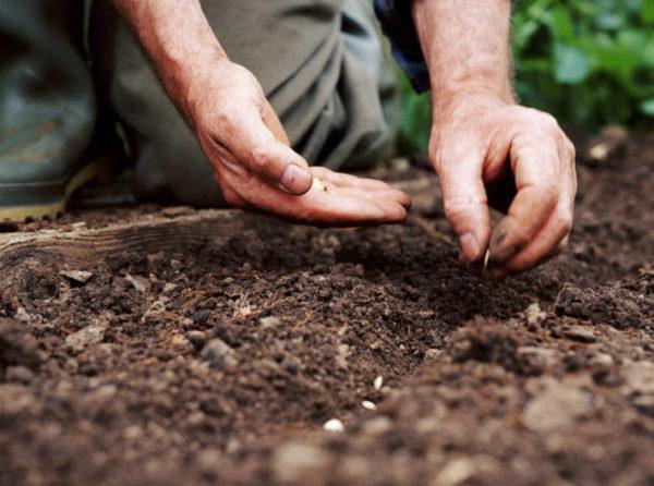 Préparation des semences pour l'ensemencement