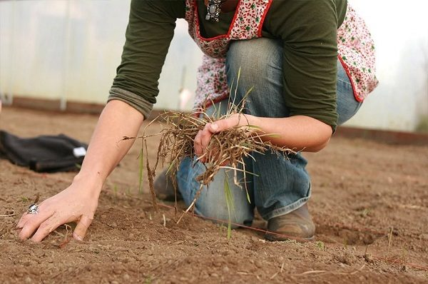 Les concombres aiment le sol neutre