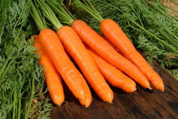 bonne récolte de carottes