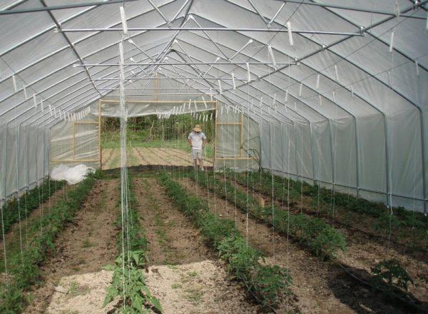 Termes pour la plantation de tomates